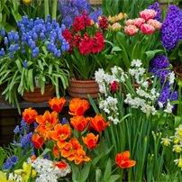 садовый центр щелково русский огород каталог