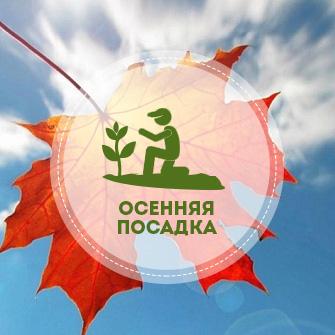Посадка деревьев и кустарников осенью