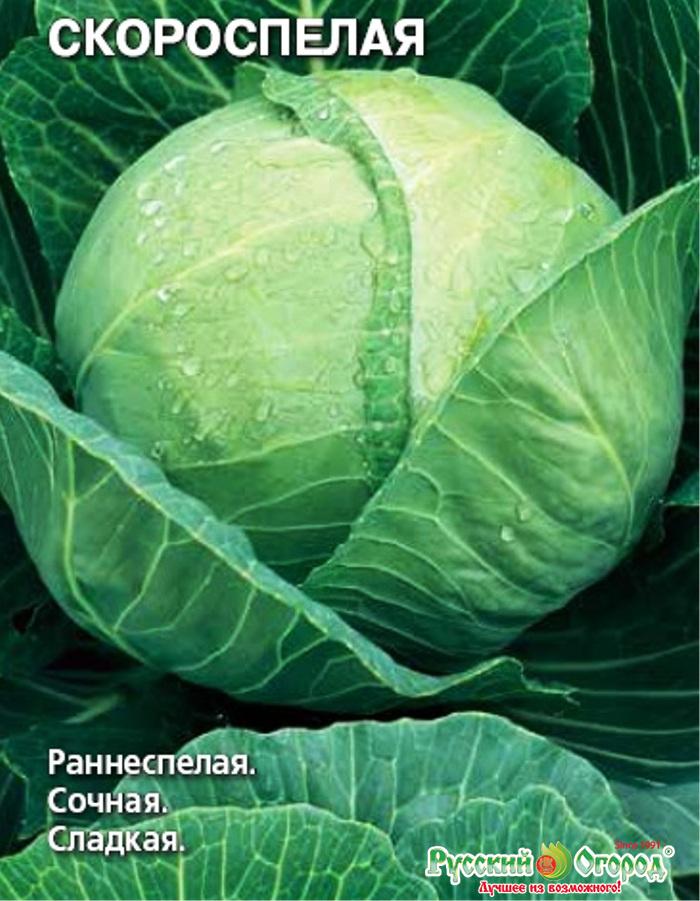 капуста скороспелая семена