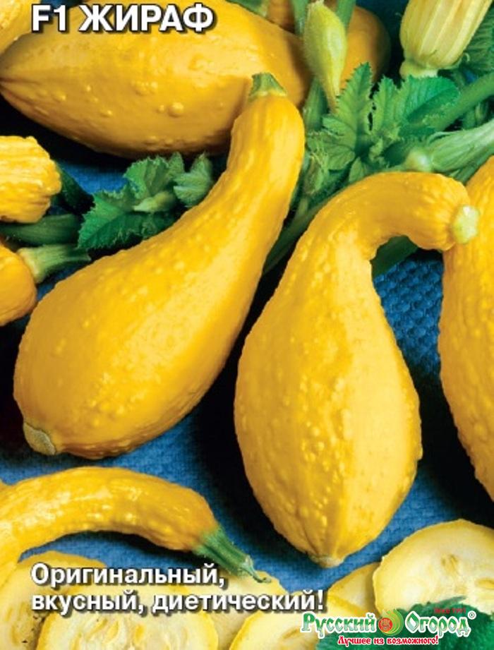 семена кабачков фото