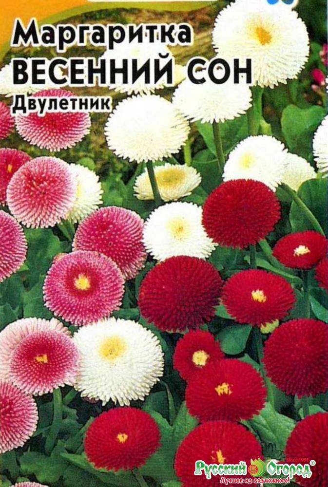 Купить цветы маргаритки минске, букет