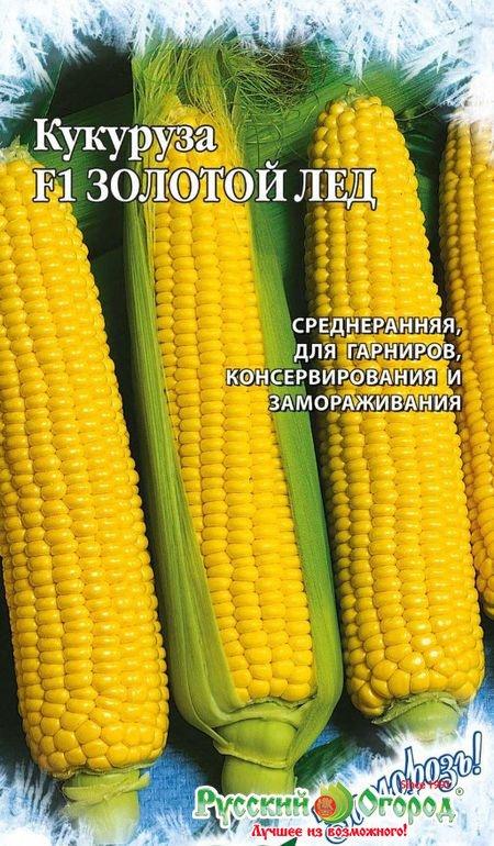 золотое семя кукурузы